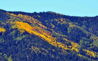 Unforgettable Road Trip to See Colorful Foliage in Northern California